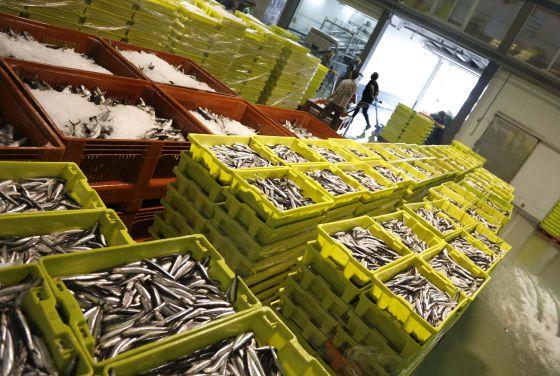 Resultat d'imatges de anchoas en bizkaia