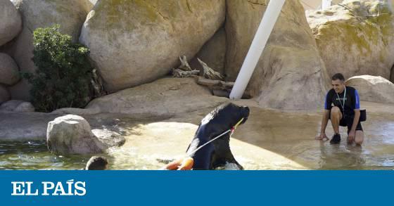 Oceanogr fic leones marinos que salvan vidas comunidad for Promociones oceanografic