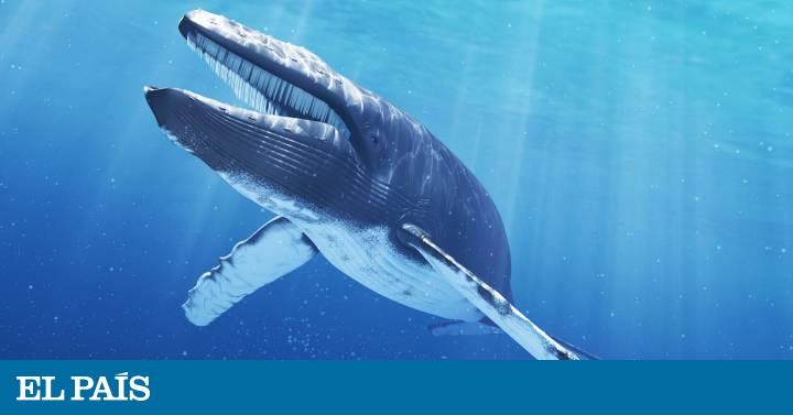 ballena azul - photo #35