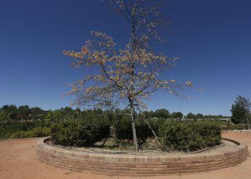 Pozuelo tala el 'árbol de la Gürtel' por el que pagó 104.000 euros en 2006