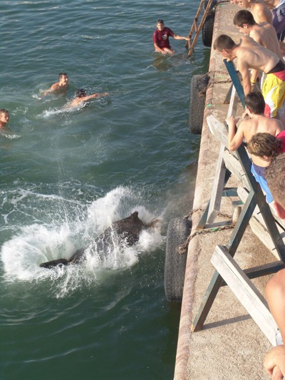 Celebración de un correbous en L'Ampolla, Tarragona, donde la vaquilla acaba en el agua, tras intentar coger a las personas que corren delante de ella, en 2005