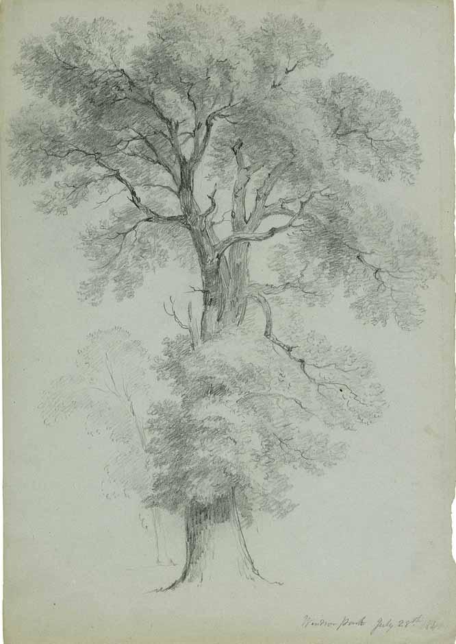 Estudio de árbol en WindsorPark, de A.B. Durand (1840)