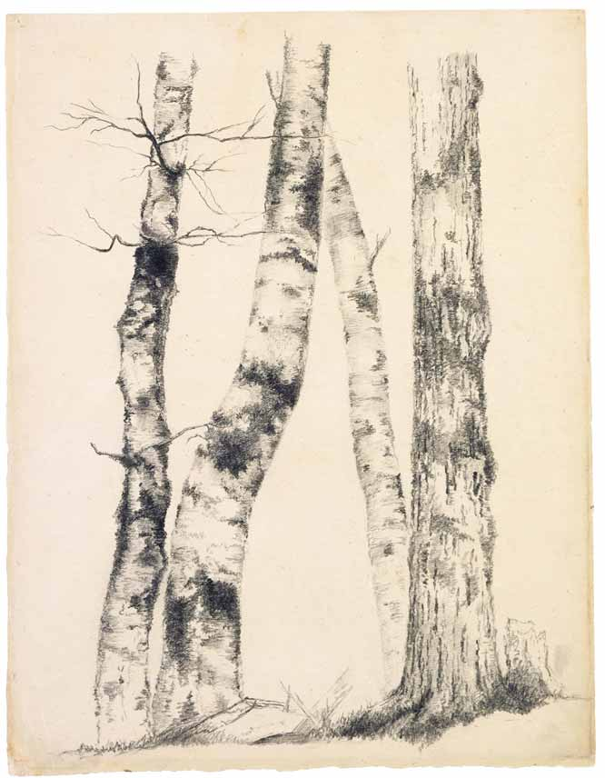 Estudio de cuatro troncos de árbol, de A.B. Durand (1855)