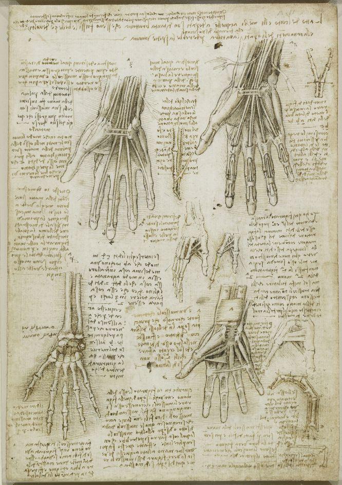 Todo o nada: Leonardo da Vinci / Anatomía de un genio