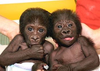 Algo sobre los monos