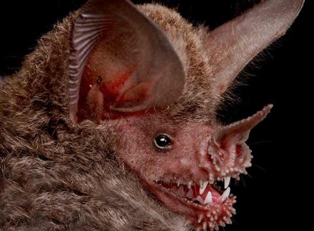 ¡Vaya día que llevo!. Se me ha metido un murciélago en casa Murcielago_nueva_especie