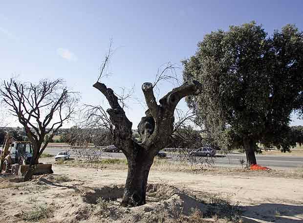 Árboles secos en la ruta de los pantanos - ELPAÍS.com