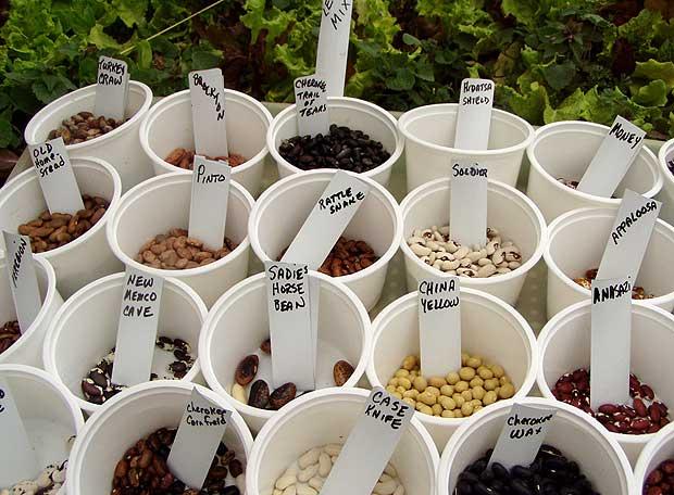 Exposición de variedades de judías secas