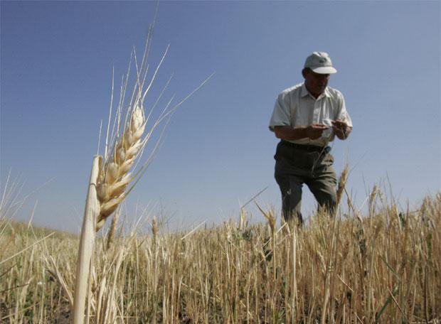 Un agricultor en una plantación de trigo | Edición impresa | EL PAÍS