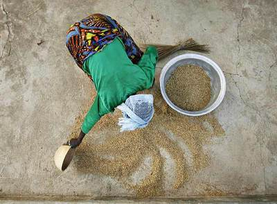 Una mujer recoge el grano de la cosecha- REUTERS
