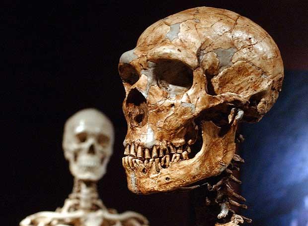 Un cráneo de neandertal (derecha), con otro de humano actual