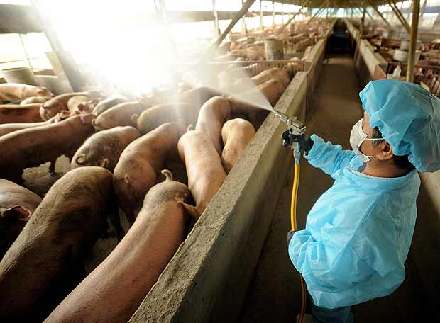 granja porcinas venezuela: