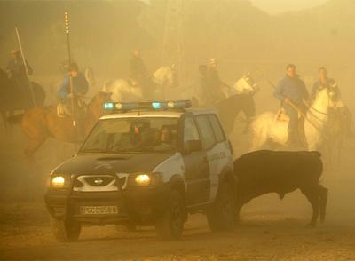 La Muerte de Moscatel (Toro de la Vega 2009) 20090916elpepisoc_3
