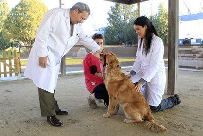 http://www.elpais.com/recorte/20110201elpmad_7/LCO340/Ies/psiquiatra_perros.jpg