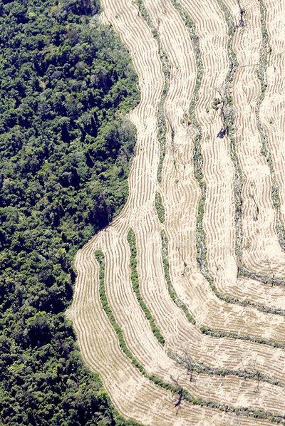 Área deforestada de la selva amazónica