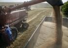 El fin de la sequía provoca la mejor producción de cereales en 10 años