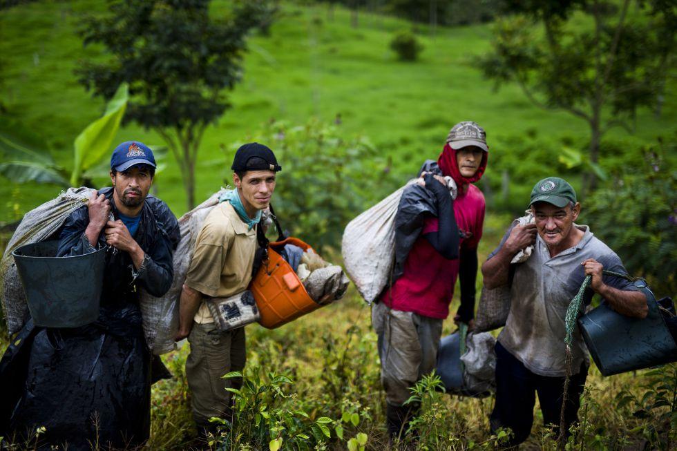 El despertar del café en la Colombia petrolera