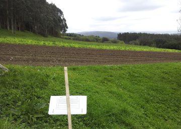 La plaga de la patata avanza imparable en Galicia tres años después de detectarse
