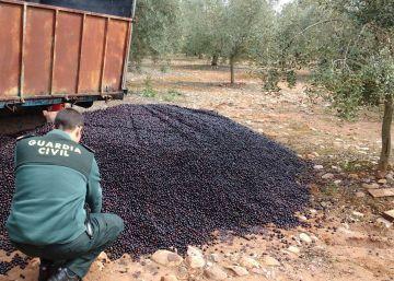EE UU endurece los aranceles para la importación de aceituna negra española