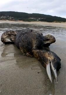 http://www.elpais.com/recorte/20021122elpepunac_5/XLCO/Ies/aves_muertas.jpg