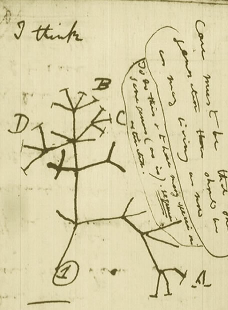 Charles Darwin en la red - El primer árbol evolutivo