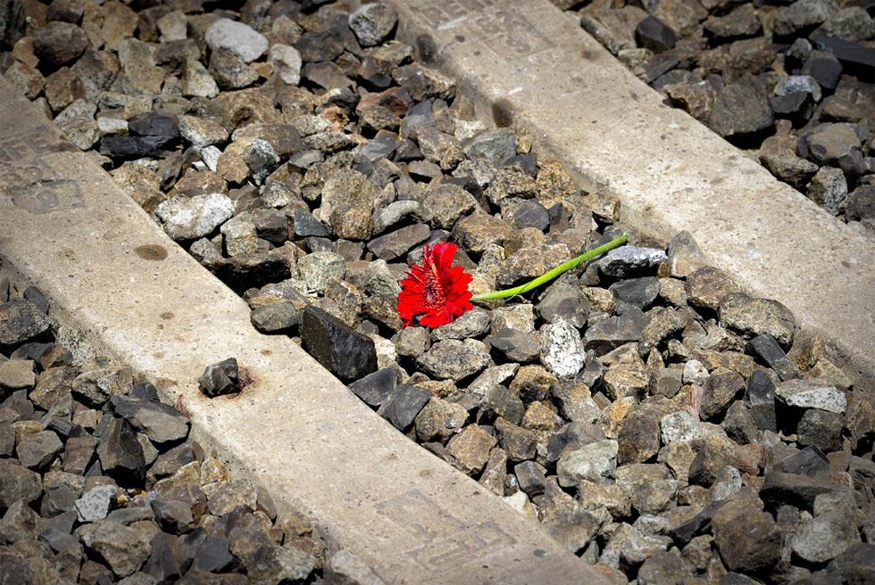 Tragedia ferroviaria en Castelldefels  - Una flor en las vías