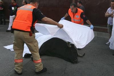 Toro muerto en los encierros de Leganés