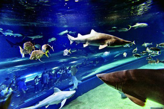 Un acuario de siete mares el pa s semanal el pa s for Acuarios baratos
