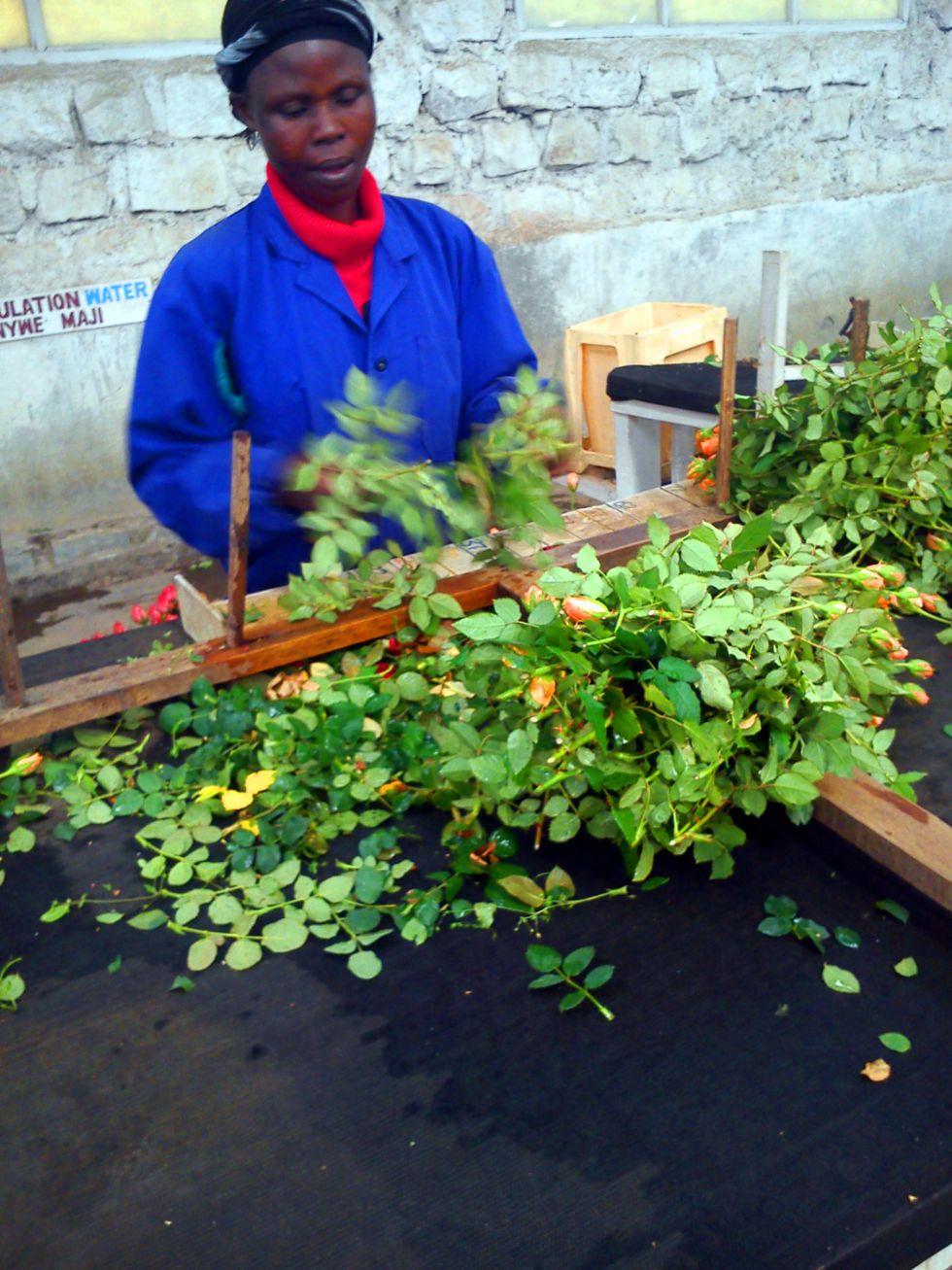Producción de flores para Europa: Kenia, Etiopía... Dubai... y falta de alimentos 1391800437_893339_1391801069_album_normal