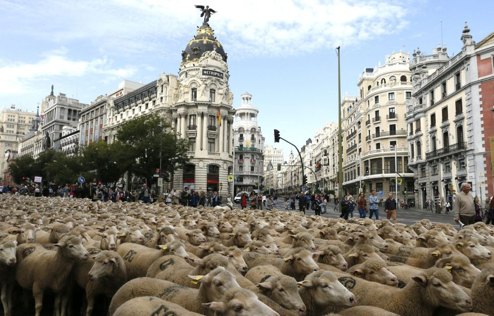 Fotos ovejas sobre el asfalto de madrid fotograf a el - Centros de jardineria madrid ...