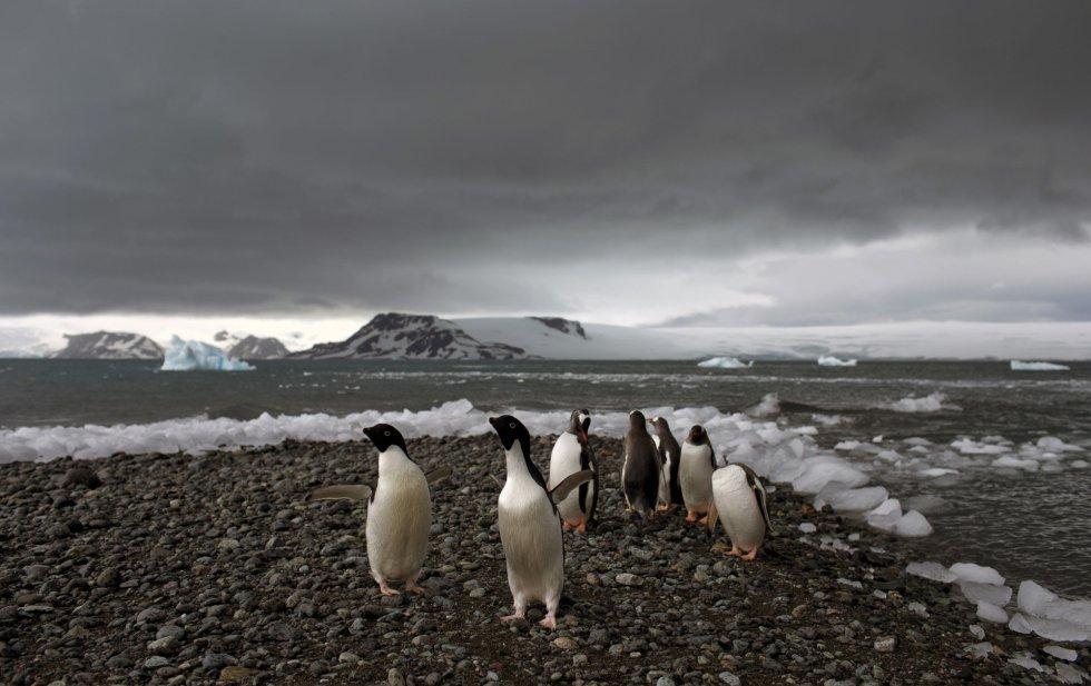 Los secretos de la Antártida (fotos) 1424427293_938053_1424427441_album_normal