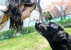 Desvelado el secreto del amor entre los perros y sus dueños