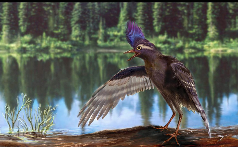 El pájaro más viejo del mundo