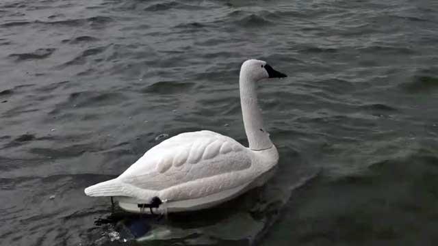 V deo el cisne robot que mantiene el agua limpia y otras for Como oxigenar el agua de un estanque sin electricidad