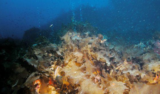 El coral se ahoga por la acidez del mar ciencia el pa s for Bungalows dentro del mar