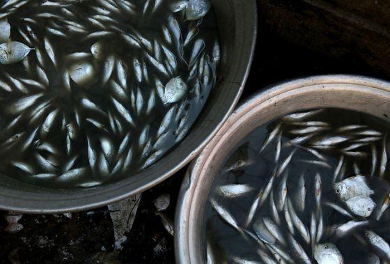 Resultado de imagen para pescado lavado