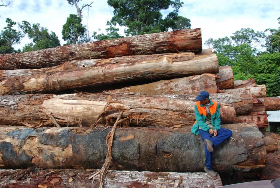 Building Logs Uk For Sle