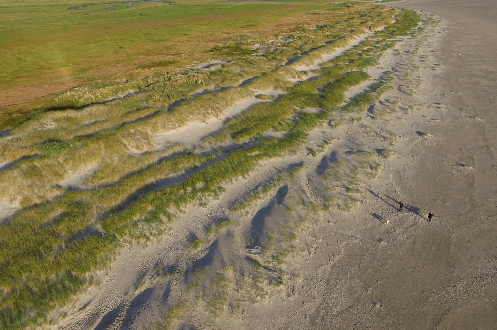 Vista aérea de una pareja paseando con su perro cerca de las dunas protegidas y salinas que se extienden a lo largo de la playa de Sankt-Peter-Ording, Alemania.