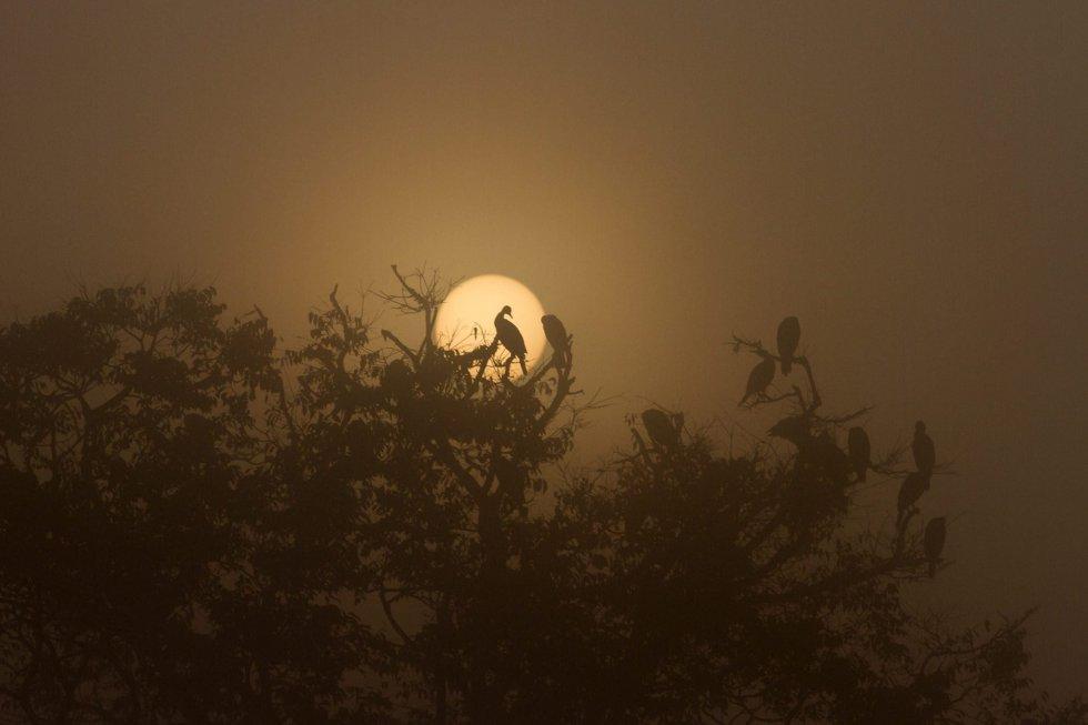 Un grupo de aves migratorias se posan en las ramas de un árbol al amanecer en el lago Taudaha, en las afueras del valle de Katmandú (Nepal).