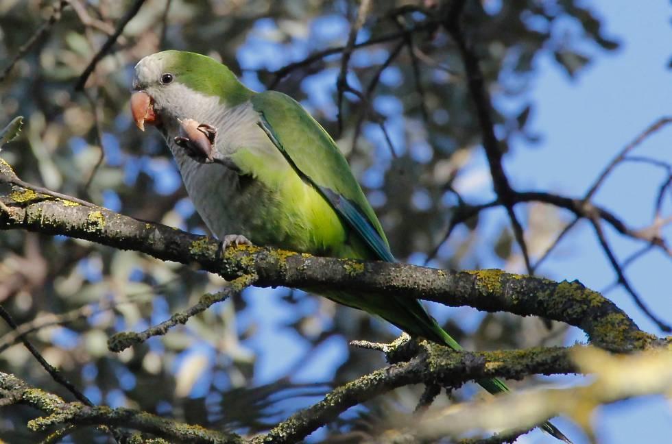 Los humanos han movido de sitio 1.000 especies de aves