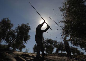 El aceite de oliva alcanza precios máximos en una década