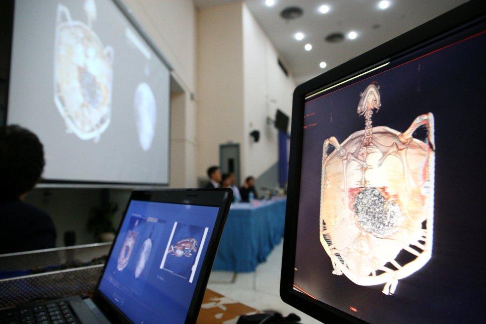 En la imagen, varias pantallas muestran imágenes de una tomografía computarizada, una prueba que obtiene una radiografía interna del animal a través del uso de rayos X.