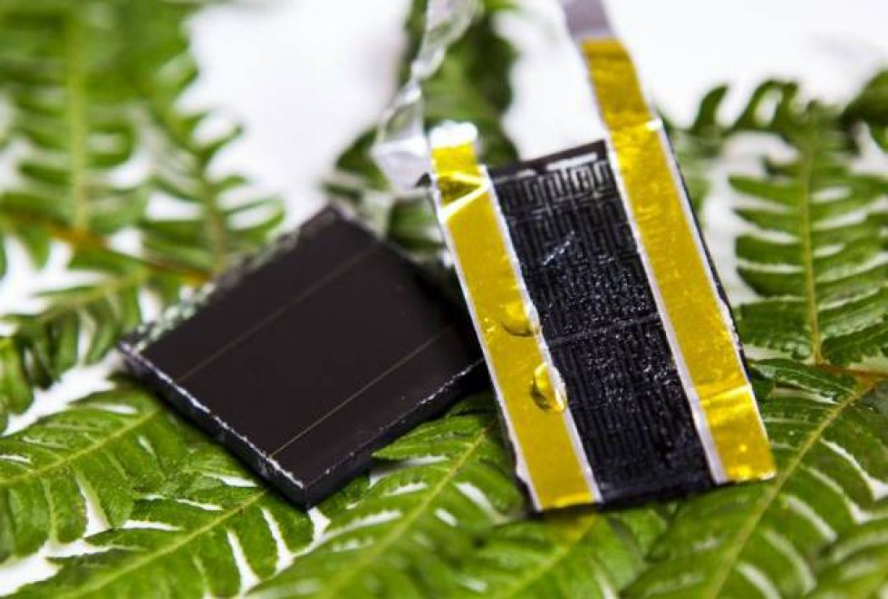 Basándose en la estructura del helecho, un equipo de la RMIT University ha desarrollado un electrodo de grafeno que podría incrementar 30 veces la capacidad de almacenamiento de los supercondensadores, unos dispositivos de almacenamiento de energía utilizados en, por ejemplo, vehículos eléctricos.