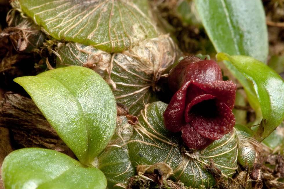 Los 'cazadores de plantas' que han descubierto más de 1.700 especies