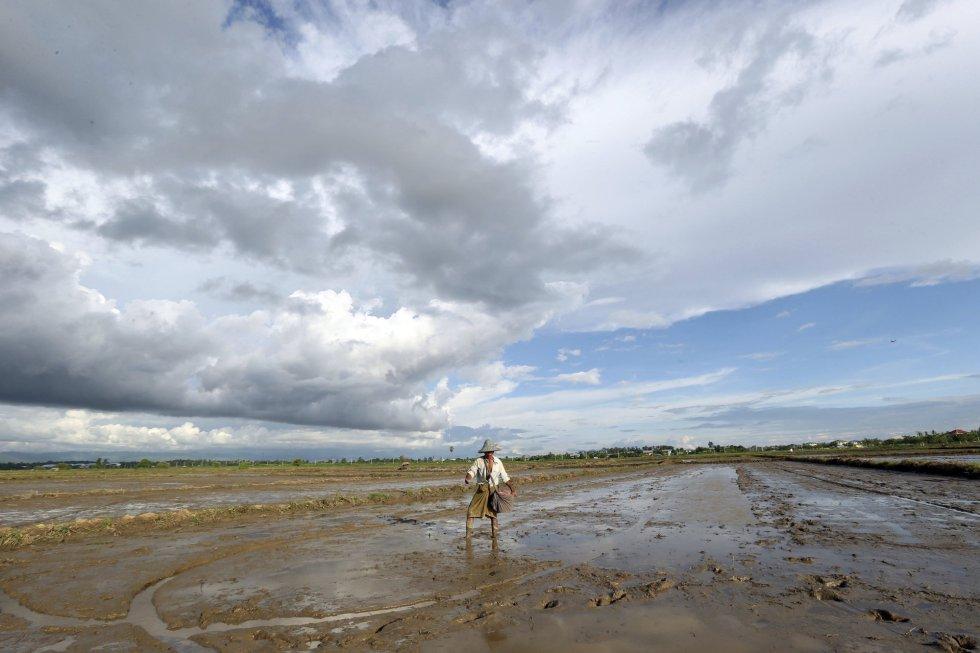 Un agricultor dispersa semillas de arroz en campos de lluvia en Naypyitaw, (Myanmar).