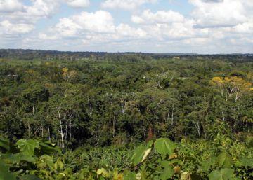 Oro y bosques, incompatibles en la Amazonía peruana