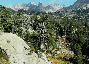 La megaerupción del Tambora quedó grabada en árboles del Pirineo