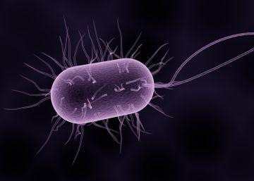 Por qué es tan díficil vencer a las superbacterias