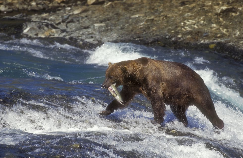 10 espectáculos de la naturaleza (JD)