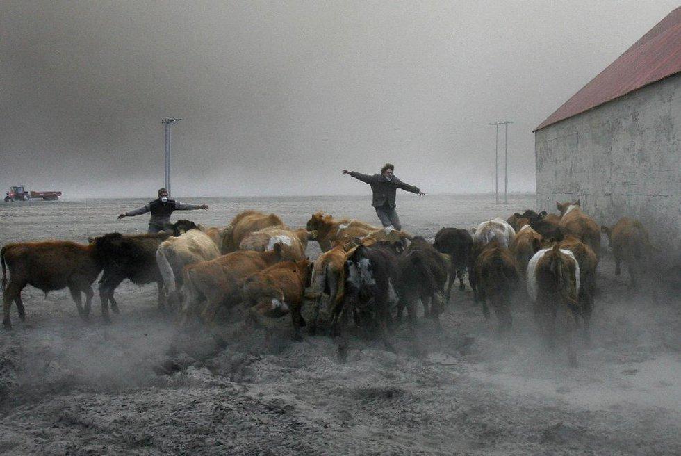 Agrupar el ganado